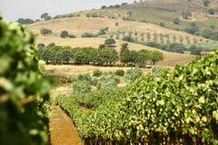Toscany-Weinberglandschaft Lizenzfreies Stockfoto