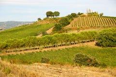 Toscanylandschap Stock Foto