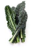 Czarny kale, włoski kale zdjęcia stock