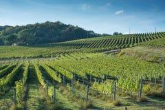 Toskańskiego winnicy wczesna jesień z małą kamienną budą 3 zdjęcie royalty free