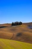Toskańscy cyprysowi drzewa. Blisko Siena Val d'Orcia. Zdjęcie Royalty Free