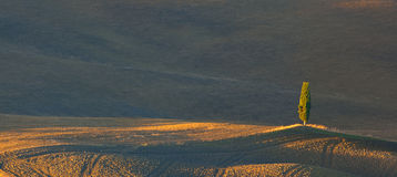 Toskański Samotny cyprys Fotografia Stock