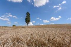 Toskana-Ackerland Lizenzfreie Stockfotografie