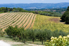 Toskana-Ackerland in Italien Lizenzfreie Stockfotografie
