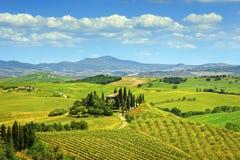 Toskana-, Ackerland- und Zypressenbäume, Grünfelder Italien Lizenzfreies Stockbild