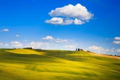 Toskana-, Ackerland- und Zypressenbäume, Grünfelder Pienza, Italien Lizenzfreies Stockfoto