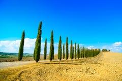 Toskana, Ackerland, Zypressenbäume rudern und fangen auf. Siena, Butzkopf Val d Stockfotos