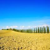 Toskana, Ackerland, Zypressenbäume rudern und fangen auf. Siena, Val d Orcia lizenzfreies stockbild