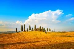 Toskana, Ackerland, Zypressenbäume und weiße Straße. Siena, Val d oder Lizenzfreie Stockfotos