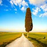 Toskana, einsamer Zypressenbaum und Landstraße. Italien Stockfotos