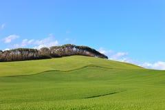 Toskana, grünes Feld, Kiefern, blauer Himmel Siena, Italien Stockfoto