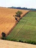 Toskana-Hügel Stockbild