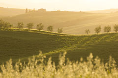Toskana (Italien) lizenzfreies stockbild