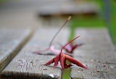Toskana, Italien, gefallene Blätter auf einer Holzbank in einem Stadtpark stockfotos