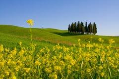 Toskana-Landschaft Stockbild