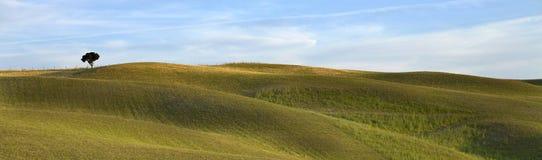 TOSKANA-Landschaft, entfernter Baum auf dem Hügel stockbild