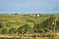 Toskana-Landschaft mit Weinbergen Lizenzfreies Stockfoto