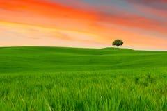 Toskana-Landschaft, schöne grüne Hügel und einsames Baum springt Lizenzfreie Stockfotografie