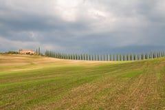 Toskana-Landschaft, schöne grüne Hügel und Zypressenbaum rudern SP lizenzfreie stockfotografie