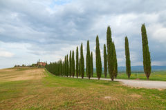 Toskana-Landschaft, schöne grüne Hügel und Zypressenbaum rudern SP stockfotografie