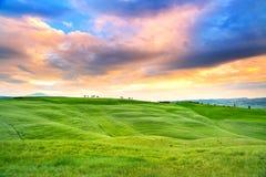 Toskana-Sonnenuntergang, Zypressenbäume und Grünfelder. San Quirico Orcia, Italien. Stockfotografie