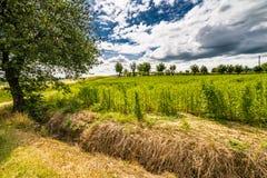 Toskana und Romagna Apennines lizenzfreies stockfoto