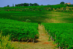 Toskana-Wein-Gutshaus stockbild