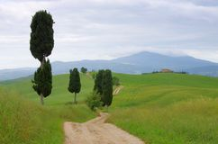 Toskana-Zypressenbäume mit Bahn Stockbilder