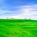 Toskana, Zypressenbäume und Grünfelder. San Quirico Orcia, Italien. Stockbild