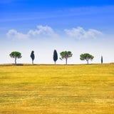 Toskana, Zypressenbäume und Grünfelder. San Quirico Orcia, Italien. Lizenzfreie Stockfotografie