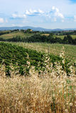 Toskania krajobrazu zdjęcia royalty free