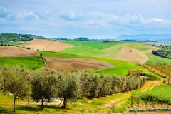Toskanische Agrucultural-Landschaft Italien, Olive Trees lizenzfreies stockbild