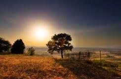 Toskanische Baumlandschaft Lizenzfreie Stockfotografie