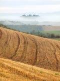Toskanische Felder Stockbild