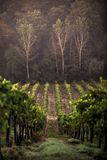 Toskanische Felder Lizenzfreies Stockbild