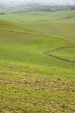 Toskanische Hügel mit Reihen der Zypressebäume Stockbilder