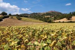 Toskanische Landschaft stockbilder