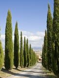 Toskanische Landschaft, Zypresse nahe einer Straße Lizenzfreies Stockfoto