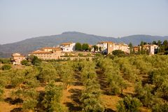 Toskanische Stadt und Olivenbäume lizenzfreie stockfotografie