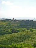 Toskanische Weinberge u. Olive Groves 03 Stockfotografie
