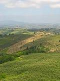 Toskanische Weinberge u. Olive Groves 05 Lizenzfreies Stockfoto