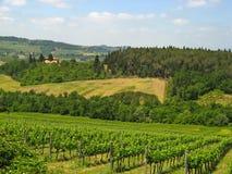 Toskanische Weinberge u. Olive Groves 06 Stockbild