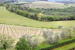 Toskanische wineyards stockfotos