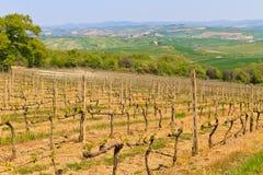Toskanischer Weinberg nahe Montalcino Stockfotografie