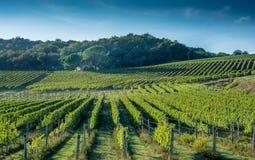 Toskanischer Weinbergfrühherbst mit kleiner Steinhütte Lizenzfreies Stockfoto