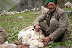 Tosquiador dos carneiros de Kinnauri Fotografia de Stock