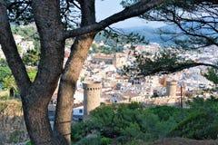 Tossa de Mar, Catalonië, Spanje, Augustus 2018 De boomstam en de takken van een een eeuw oude paraplupijnboom tegen de achtergron stock afbeeldingen