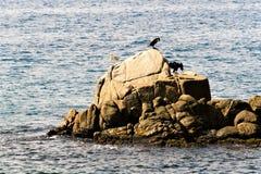 Tossa De Mar, Hiszpania, Sierpień 2018 Denni ptaki na osamotnionej skale blisko wybrzeża zdjęcia stock