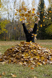 Tossing Leaves Royalty Free Stock Photography