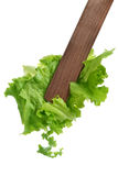 Tossing Lettuce Royalty Free Stock Photography